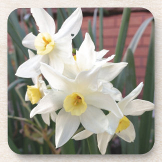Daffodils in Bloom Beverage Coaster