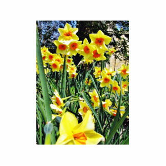 Daffodils In Blossom Photo Cut Out