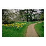 Daffodils in Magdalen's extensive gardens  flowers Poster