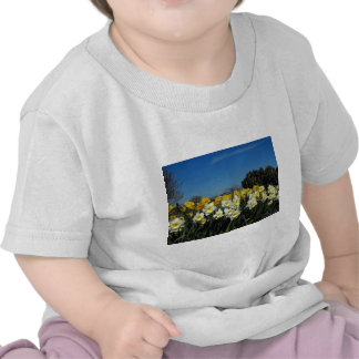 daffodils in spring time shirt