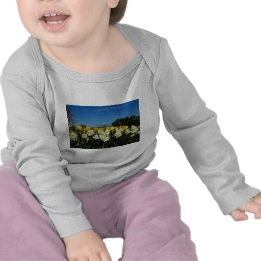 daffodils in spring time tee shirts