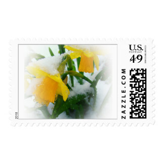 DAFFODILS IN THE SNOW II POSTAGE STAMP