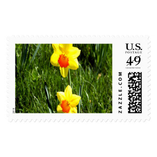 Daffodils Large Postage Stamps