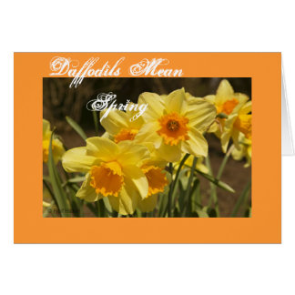 Daffodils Mean Spring Greeting Cards