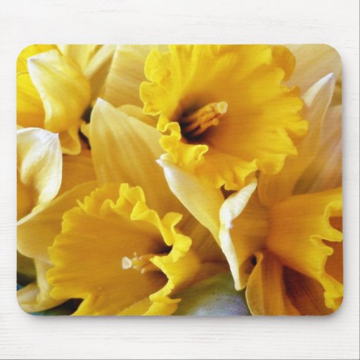 Daffodils Mouse Pads