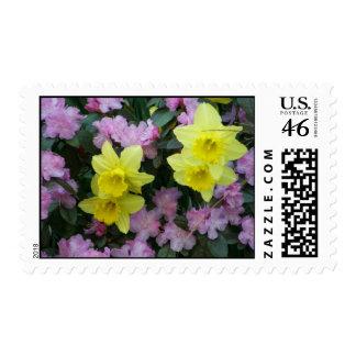 Daffodils/Narcissus/Azalea Postage Stamp