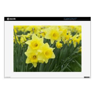 "Daffodils RF) 15"" Laptop Skin"