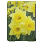 Daffodils RF) Cover For iPad Air