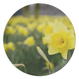 Daffodils (RF) Dinner Plate