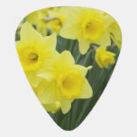 Daffodils RF) Guitar Pick