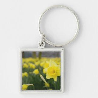 Daffodils (RF) Keychain