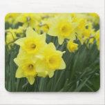 Daffodils RF) Mouse Pad