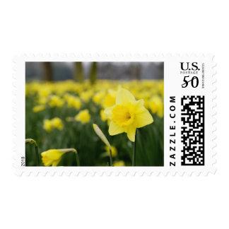 Daffodils (RF) Postage