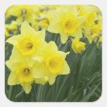 Daffodils RF) Square Sticker