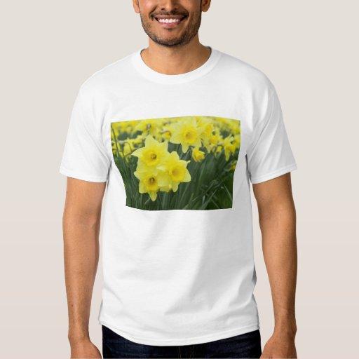 Daffodils RF) T-Shirt