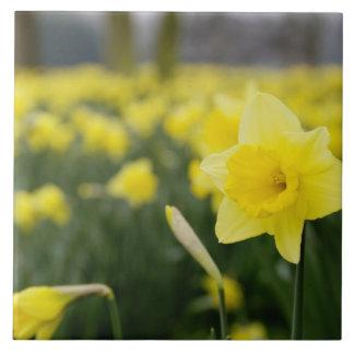 Daffodils (RF) Large Square Tile