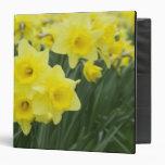 Daffodils RF) Vinyl Binder