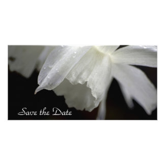 Daffodils Save the Date Photo Card