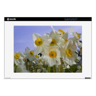 Daffodils! musicskins_skin