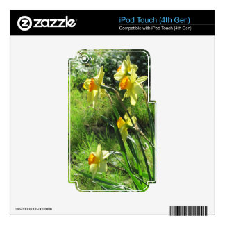 Daffodils iPod Touch 4G Skins