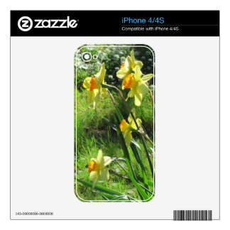 Daffodils Skin For The iPhone 4