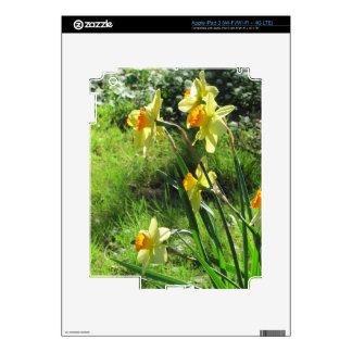 Daffodils Decal For iPad 3