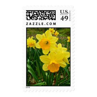 Daffodils © Steven Dale 2010 Postage