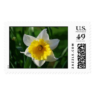 Daffodils Symbolize Renewal Postage