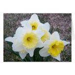 Daffodils Sympathy Card