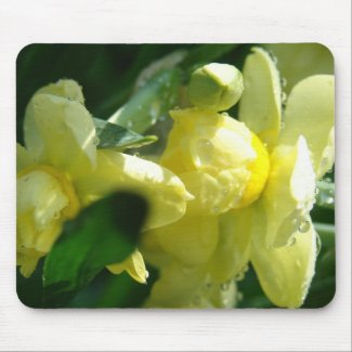 Daffodils With Water Droplets mousepad