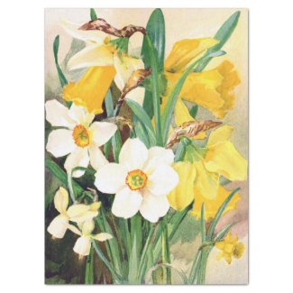 Daffodils Yellow and White Tissue Paper 17x23
