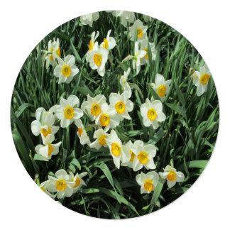 Daffodils Yellow White Card