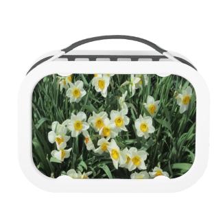 Daffodils Yellow White