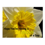 daffy dilly of a day postcard