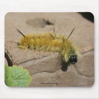 Dagger Moth Caterpillar Nature Photo Mousepad