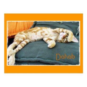 Beach Themed Dahab Cat Daze Postcard