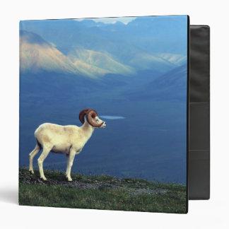 Dahl ram standing on grassy ridge, mountains binders