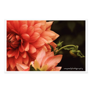 """Dahlia"" Botanical Notecard Stationery"