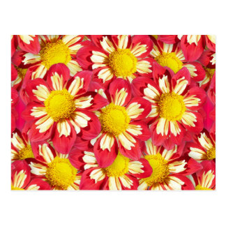 Dahlia bouquet - coral and white with yellow postcard