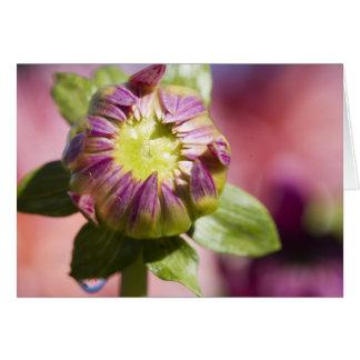 Dahlia bud greeting card