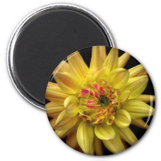 Dahlia Corona Magnet