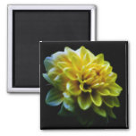 Dahlia flower and meaning 2 inch square magnet