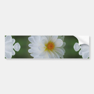 Dahlia flower and meaning car bumper sticker