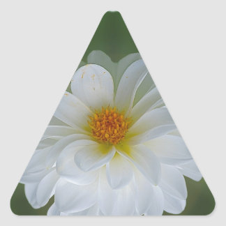 Dahlia flower and meaning triangle sticker