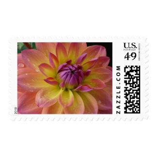 Dahlia Flower Bloom Stamp