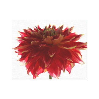 dahlia flower digital painting Wrapped Canvas