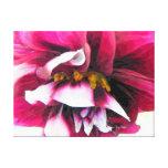Dahlia Flower Fun Stretched Canvas Print