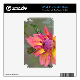 Dahlia Flower iPod Touch 4G Skins