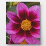 Dahlia Flower Placas Con Fotos