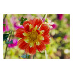 Dahlia Flower--Pooh Posters